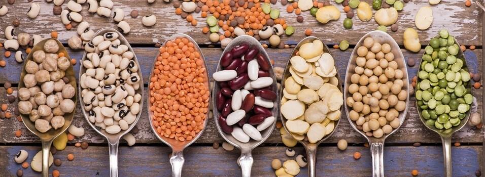proteines-legumineuses